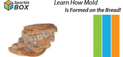 bread mold experiment for kids at home - sparklebox