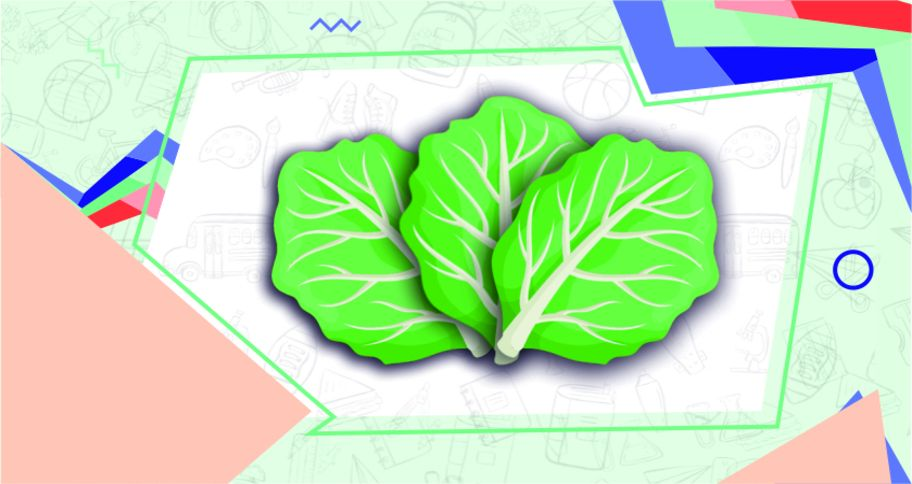 A cabbage leaf used in Cabbage Science Experiments for Kids