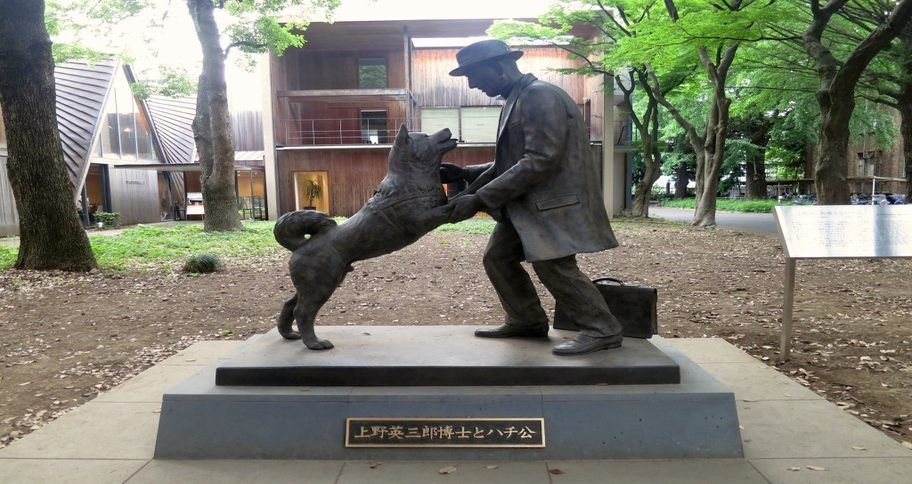 The real Hachiko tribute