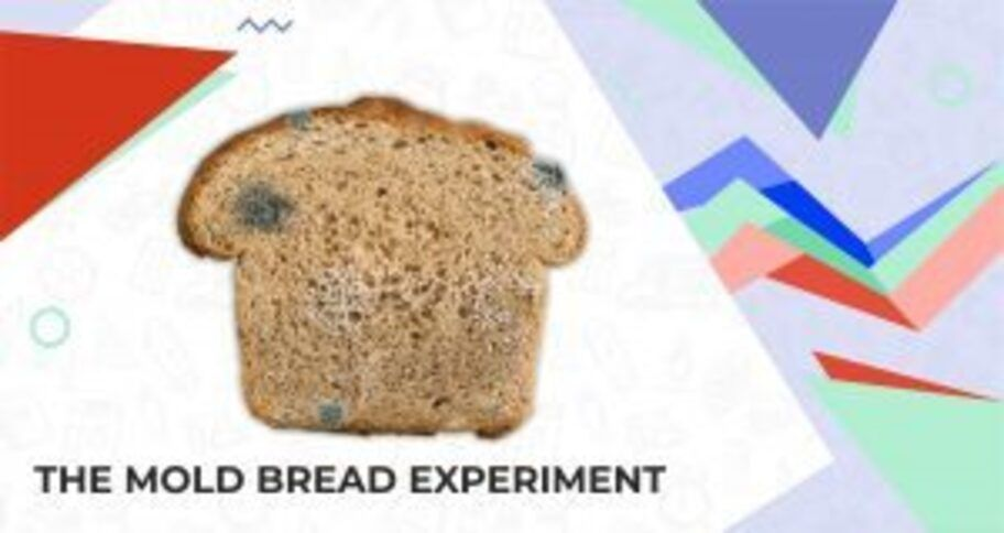 bread mold experiment for kids - learn the cause behind it
