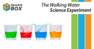 capillary action water experiment for kids